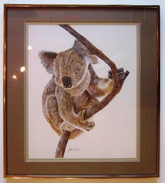 Koala before